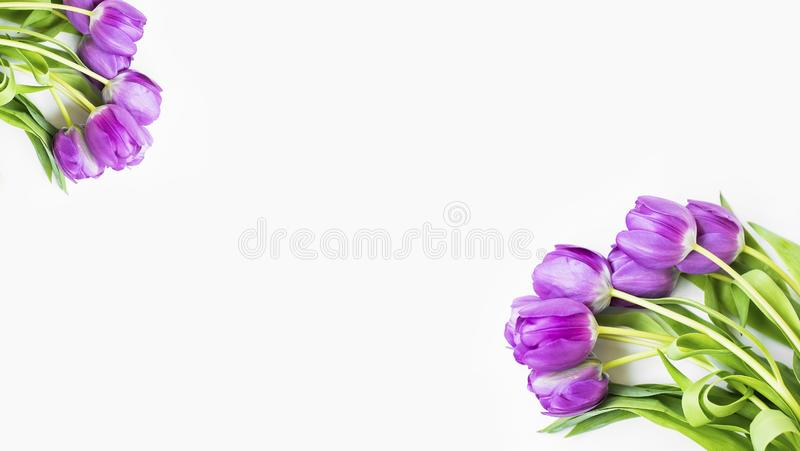 Spring purple tulips bouquet, spring flowers bouquet on white background, top view, spring greeting card stock photos