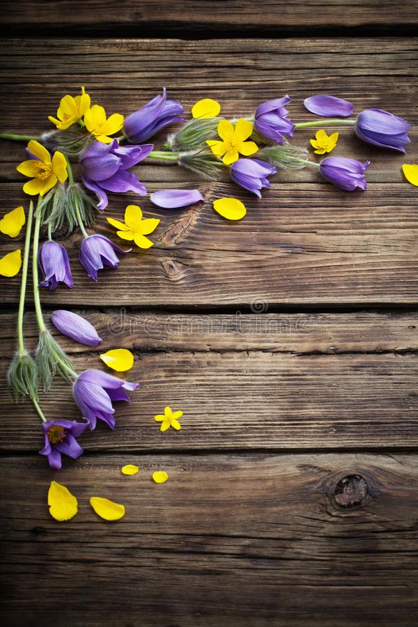 Purple and yellow flowers on old wooden background. Spring purple and yellow  flowers on old wooden background stock photo
