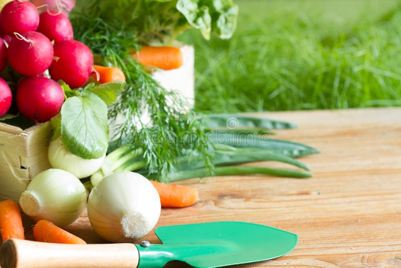 Spring raw fresh organic vegetables harvesting in the garden stock photo