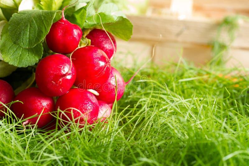 Spring raw fresh organic vegetables harvesting in the garden stock photos