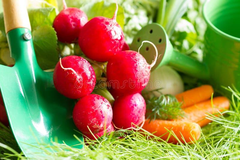 Spring raw fresh organic vegetables harvesting in the garden. Closeup stock photo