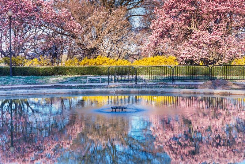 Spring Reflections Washington DC royalty free stock image