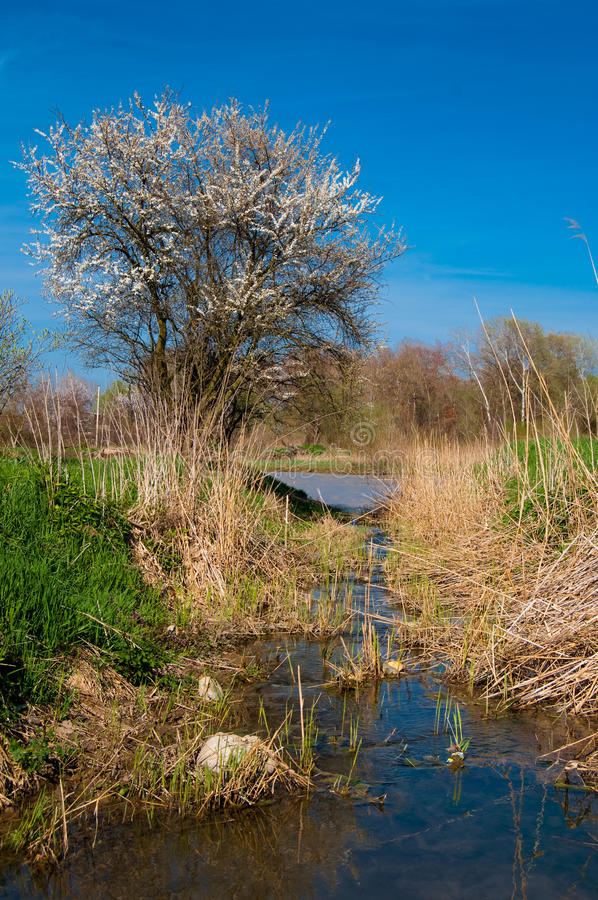 Free Spring River Royalty Free Stock Photography - 13951927