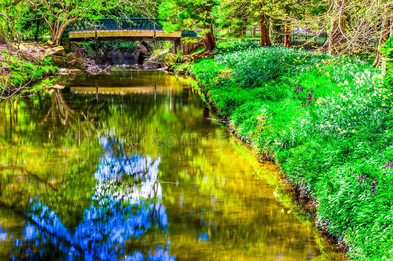 Spring River Bank lush green forest royalty free stock image