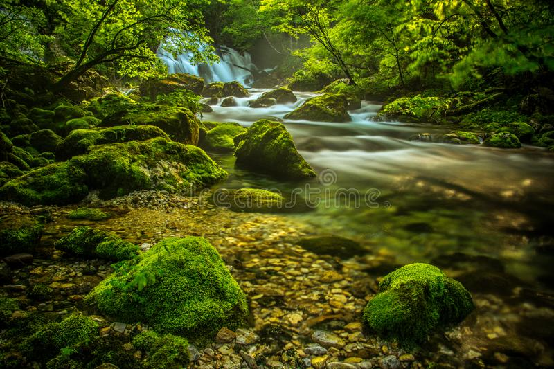 Spring river Bistrica and few rocks. Picture taken in Bohinj valley, Julian alps, Slovenia stock photos