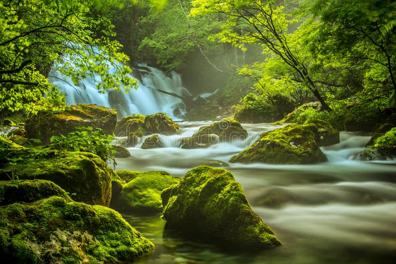 Spring river Bistrica in slow motion. Picture taken in Bohinj valley, Julian alps, Slovenia royalty free stock photography