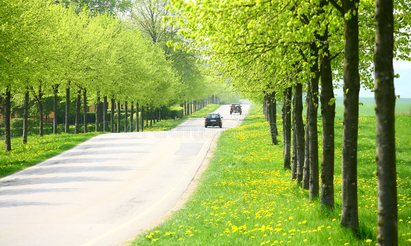 Download Spring road stock photo. Image of forestall, bucolic, alignment - 1712372