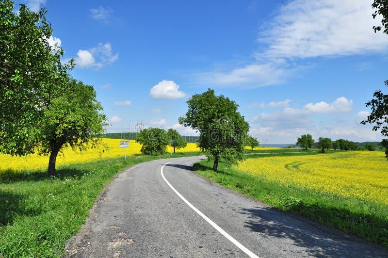 Spring road landscape stock images