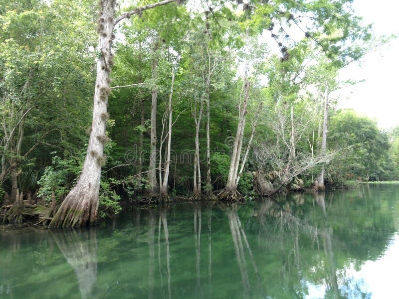 Spring run in N Central FL; Silver River, Silver Springs, Fl stock image