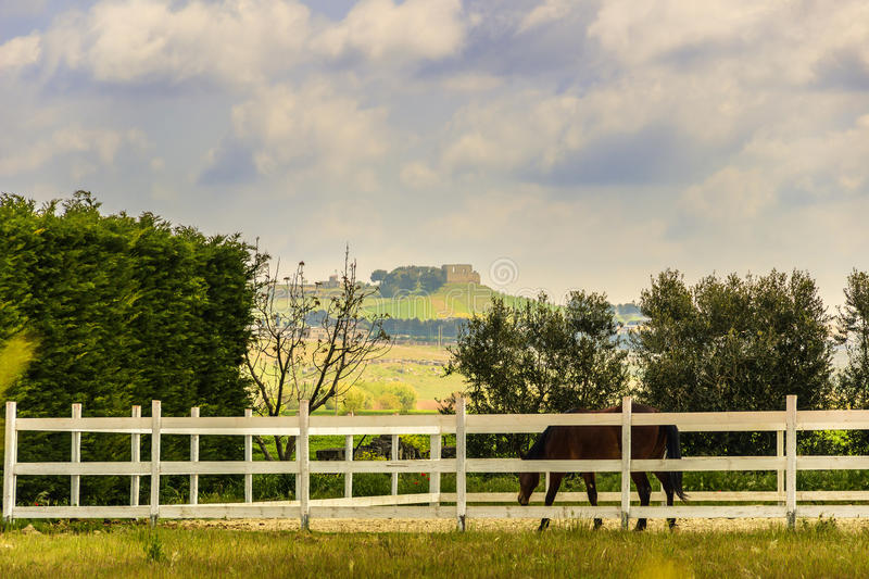 Spring rural landscape: farm with horse, Gravina di Puglia. Italy (Apulia). Hilly landscape with a horse in the corral. In the background the ruins of the castle royalty free stock photos