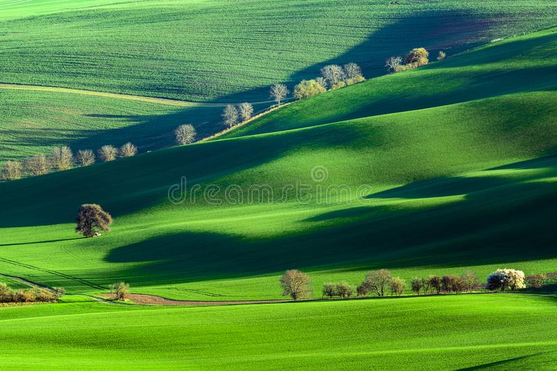 Spring rural nature landscape with blossoming flowering trees on green wavy rolling hills. Amazing sunset evening light. Spring. Background stock photography