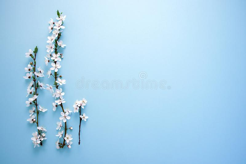 Spring`s blooming tree with white flowers on blue background. Space for your design stock photo