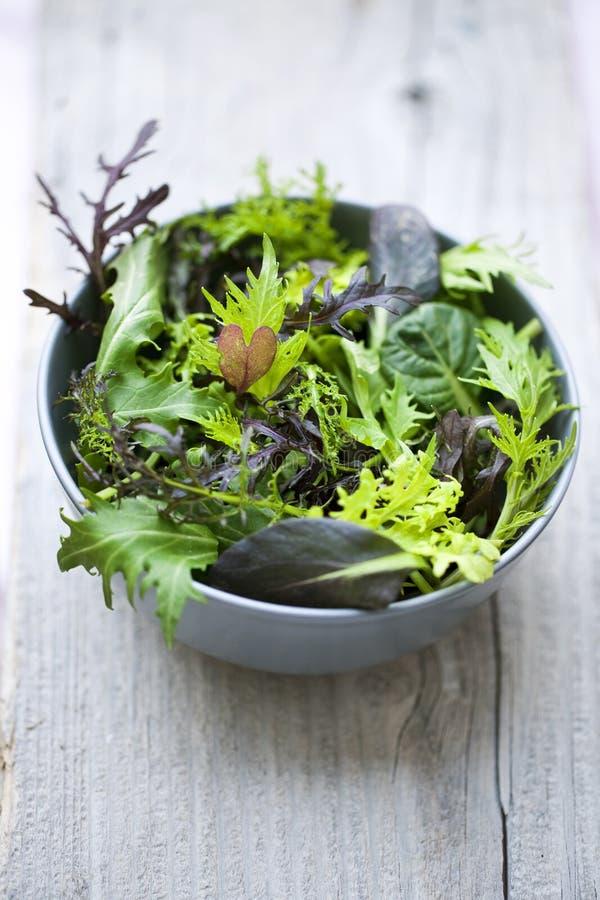 Free Spring Salad Stock Image - 26610431
