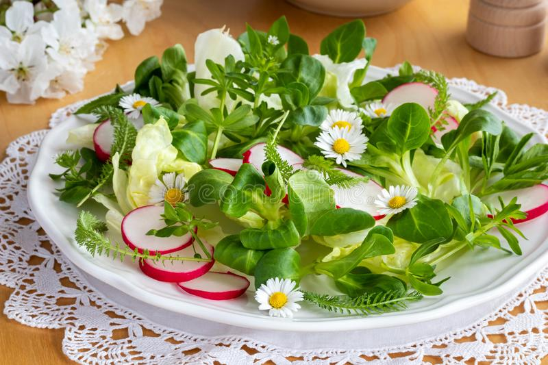 Spring salad with chickweed, bedstraw, yarrow and daisies royalty free stock photography