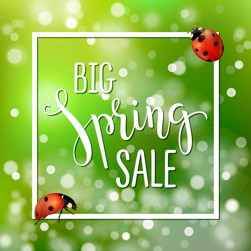 Spring sale banner with realistic ladybugs. Design template for wallpaper, background, flyers, invitation, posters stock illustration