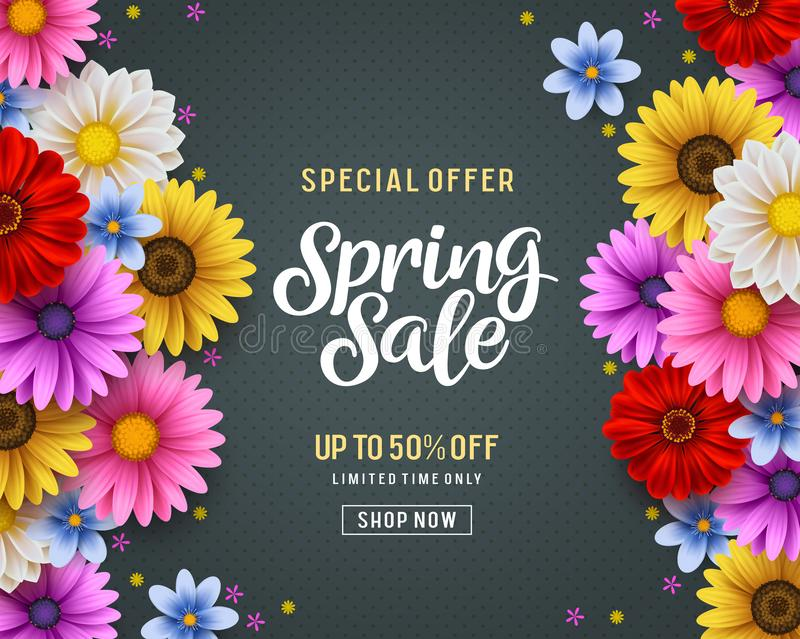 Spring sale and special offer vector banner background with colorful chrysanthemum and daisy flowers royalty free illustration