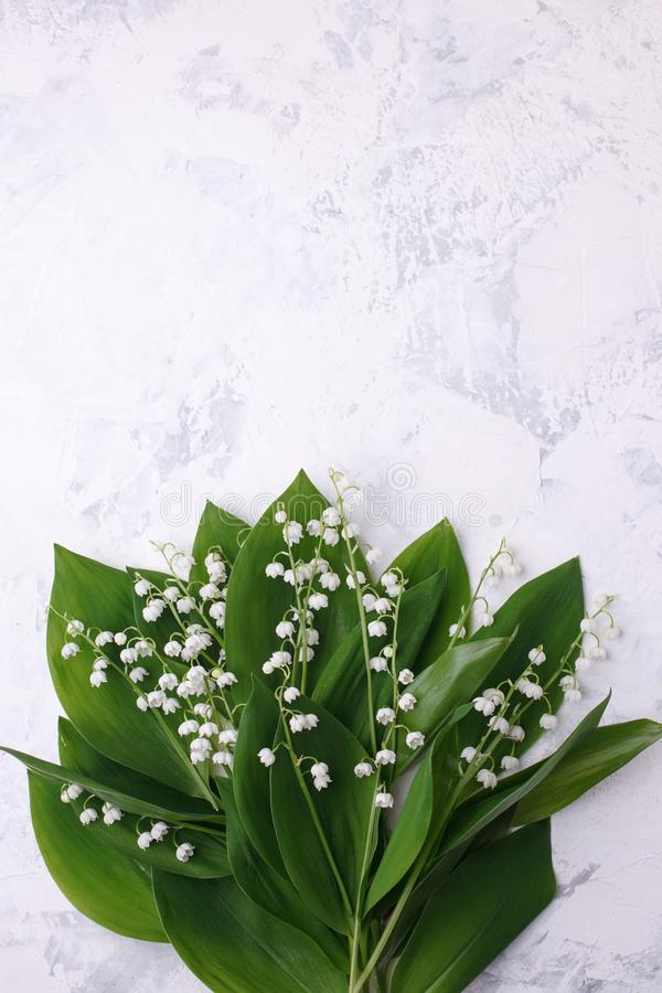 Spring season background, fresh lily of the valley flower on white background. Copy space, mother day, Happy easter card.  royalty free stock image
