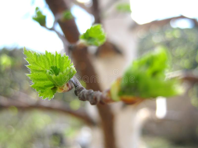 Spring: a Season of New Hopes royalty free stock image