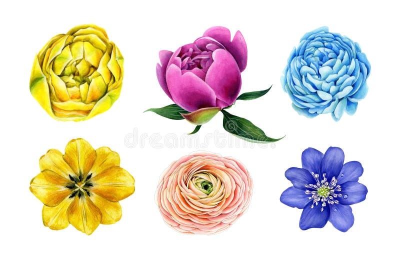 Spring set of big flowers. Blooming garden plants. stock photos