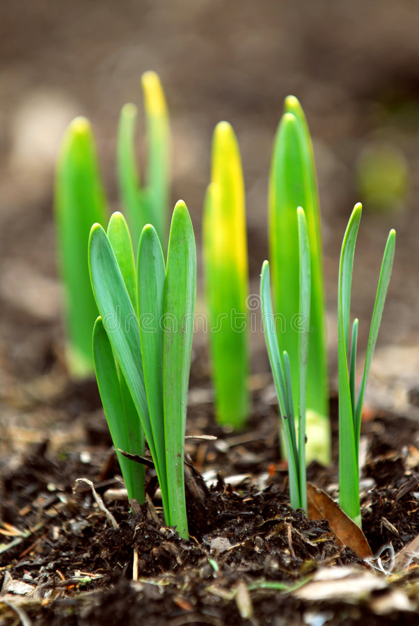 Spring shoots stock images
