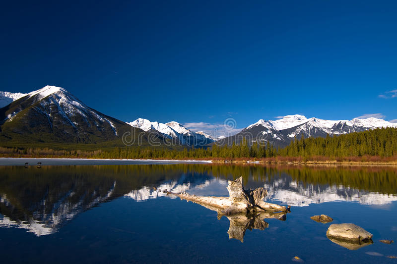 Download Spring at Snow mountian stock image. Image of green, mountain - 10345909