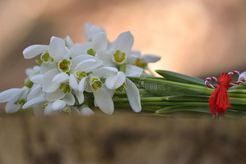 Spring snowdrop flowers. Snowdrop bouquet. stock photography