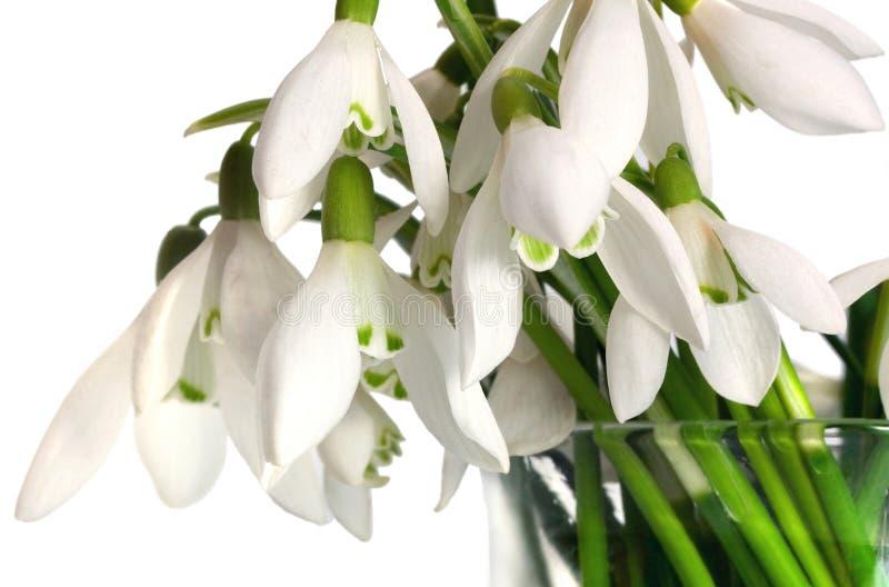 snowdrop flowers green grass bouquet stock photo