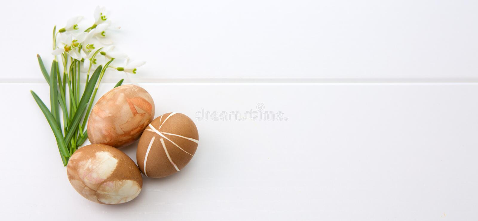 Spring snowdrop and brown easter eggs . stock photos