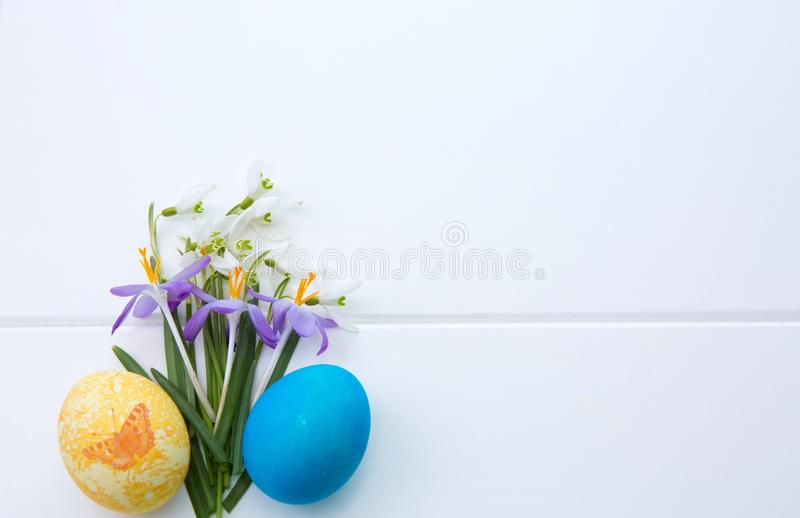 Spring snowdrop and purple crocus . Easter background. royalty free stock photography