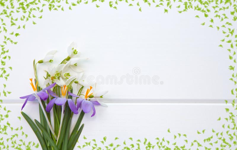 Spring snowdrop and purple crocus . stock images