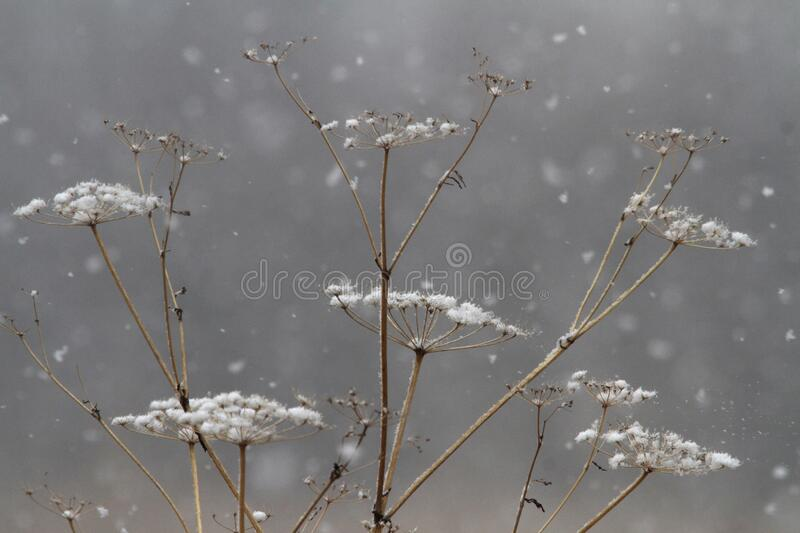 Spring Snowfall in Iowa royalty free stock photography