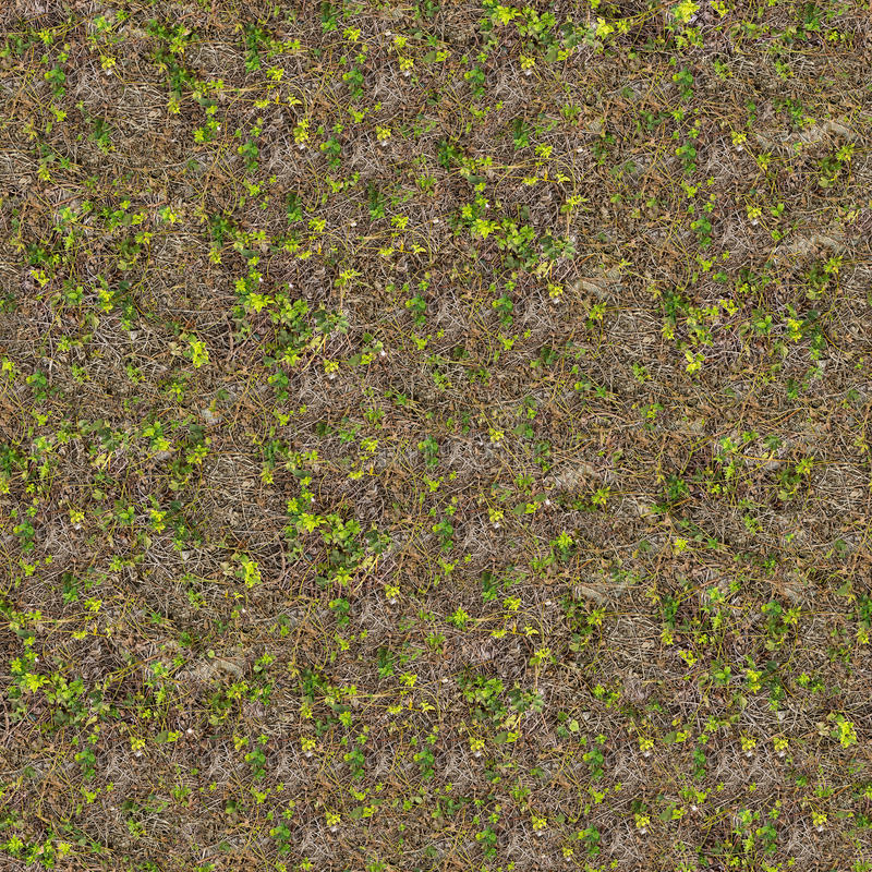 Spring Soil with Young Shoots of Plants. stock photography
