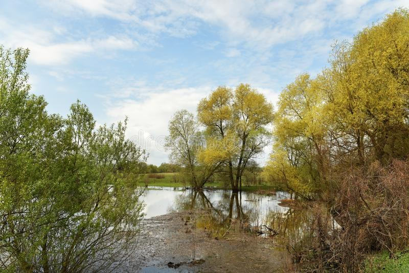Spring spill on the river. Delicate colors of spring greens. spring landscape of the river. royalty free stock image