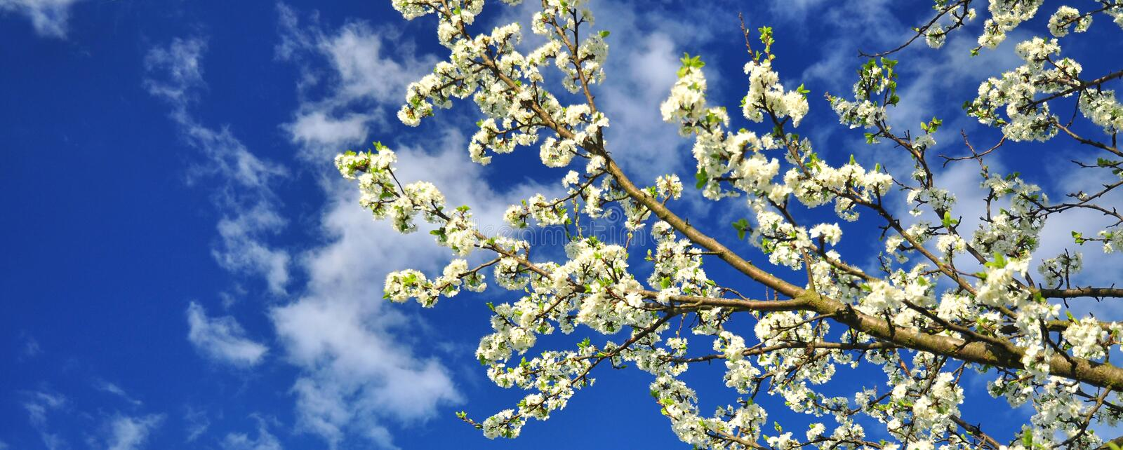 Spring springtime royalty free stock photo