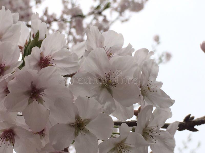 Spring is start stock photo