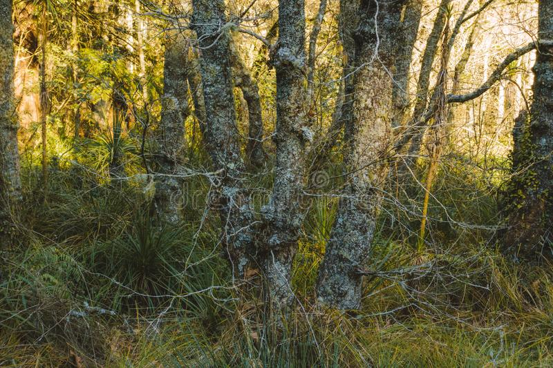Local woodland late afternoon sun. Spring is starting to show through with the longer days and fresh growth stock photos