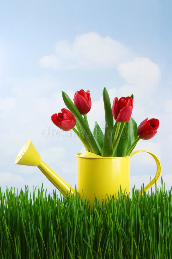Download Spring Still Life Royalty Free Stock Images - Image: 2305389