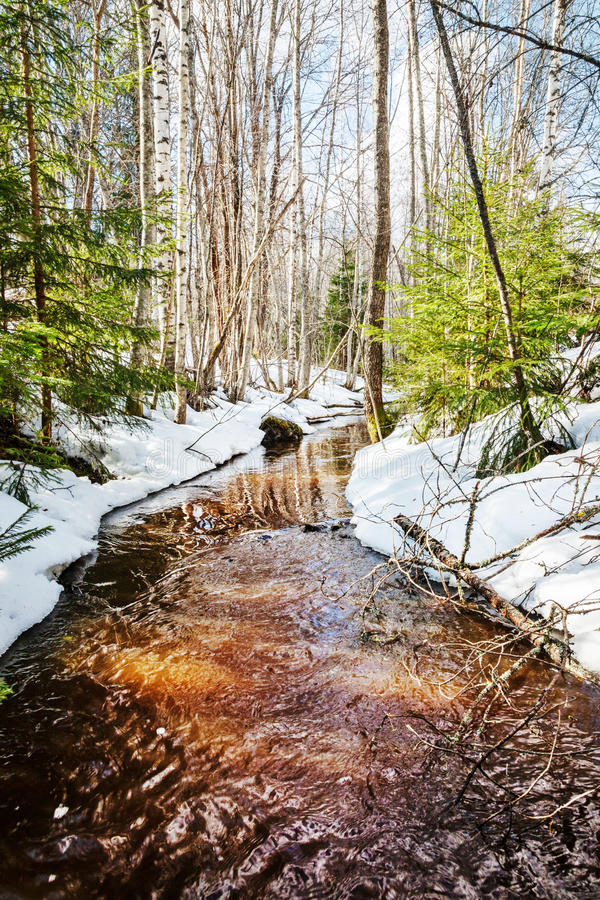 Spring stream in forest stock photo