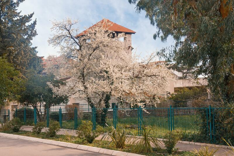 Spring street.  Flowering plum tree. Montenegro, view of Tivat city. Color toning stock photos