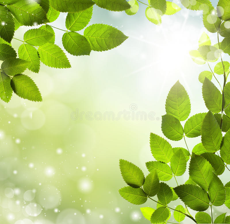 Spring or summer abstract background with bokeh lights. royalty free stock image