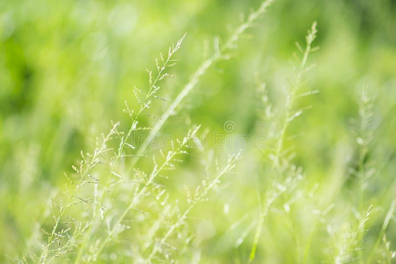 Spring or summer abstract nature background with grass and bokeh lights stock photo