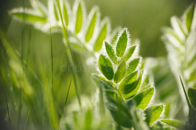 Spring or summer abstract nature background. With grass in the meadow stock images