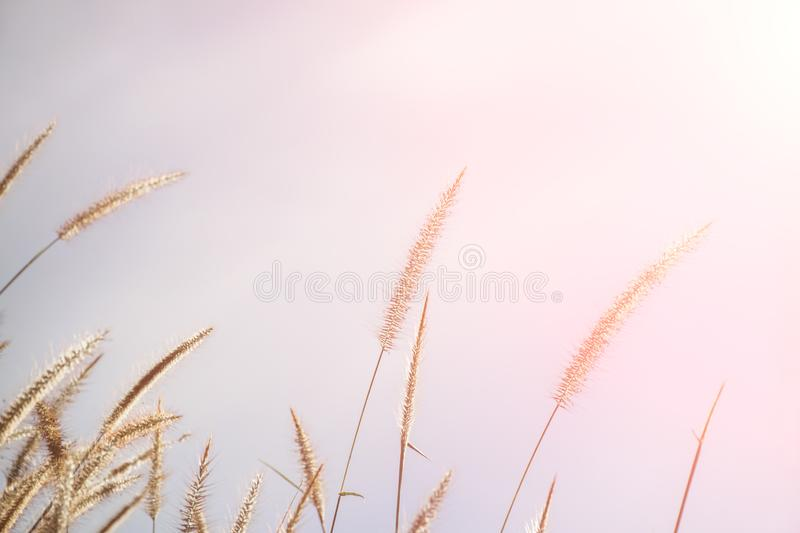 Spring or summer abstract nature background with grass in the meadow and blue sky in the back. Art beam beauty blur bokeh cloud color concept day defocus design stock photography