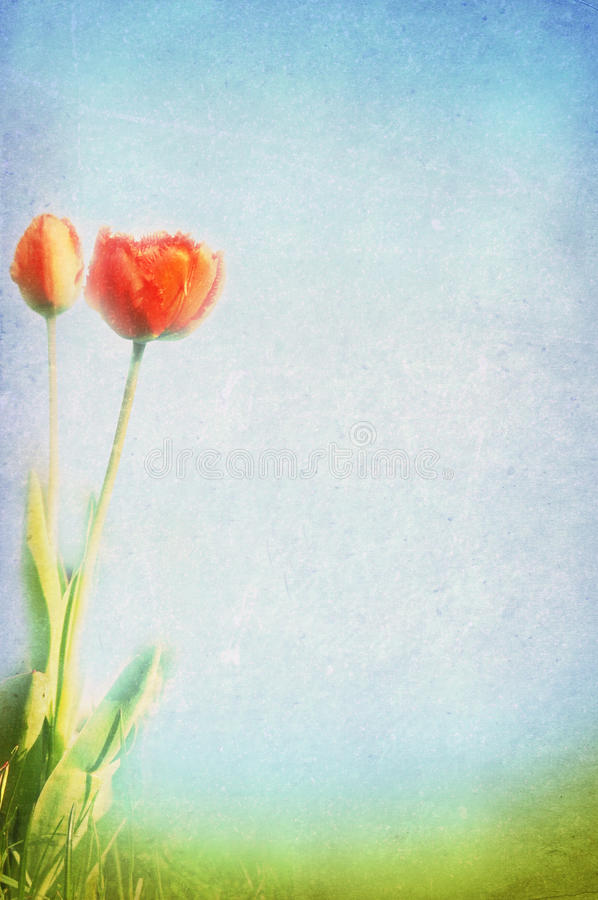 Spring, summer background royalty free stock photography