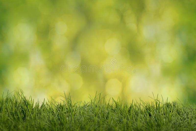 Spring-Summer background. Green meadow with green yellow background in back light royalty free stock image