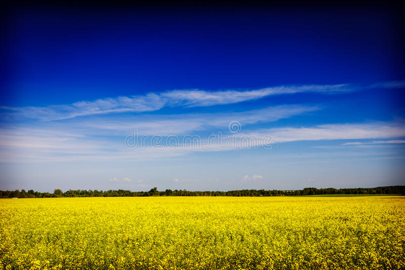 Spring summer background field with blue sky royalty free stock photos