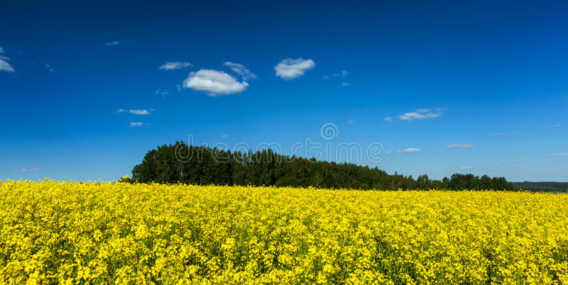 Spring summer background - wild with blue sky royalty free stock photos