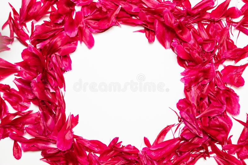 Spring composition of red peony petals frame with place for text on gray background. Flat lay, top view royalty free stock photo