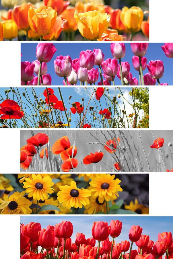 Spring and summer flowers royalty free stock photos