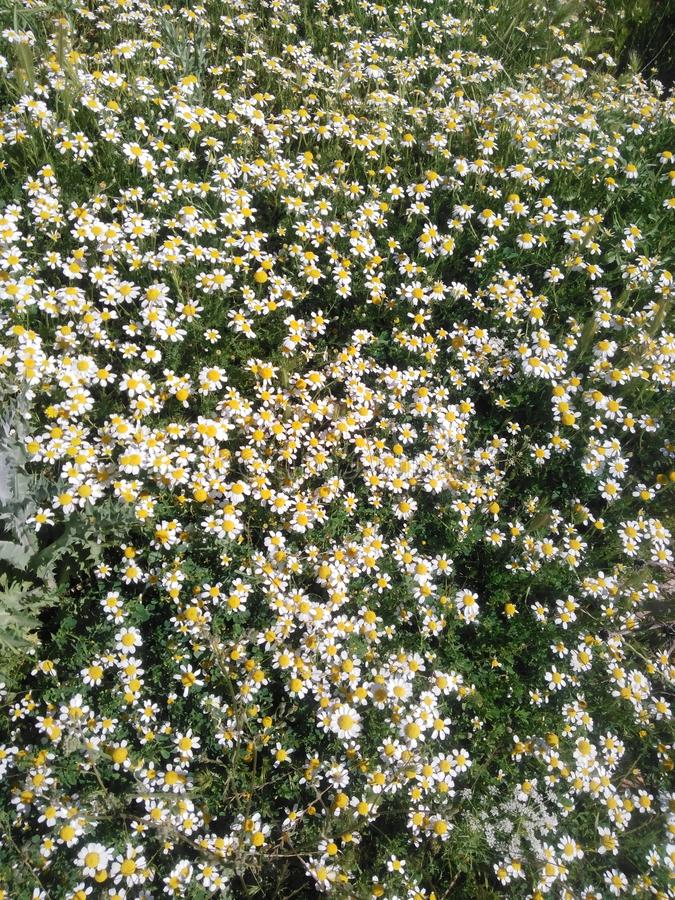 Many flowers royalty free stock images